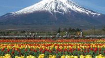 6天經典日本、關東、關西